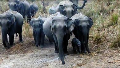 Arunachal- Wildlife thriving in D. Ering Wildlife Sanctuary, welcomes visitors