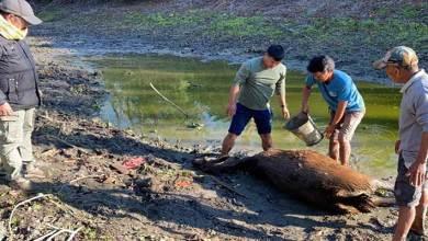 Arunachal: Female Sambar Deer found dead in DEWS