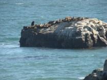 Off the coast rests a pod of seals