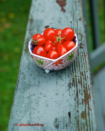 Pics of freshly harvested Cherry Tomatoes from the Garden by Arun Shanbhag