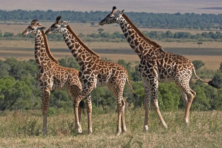 safari in africa.jpg