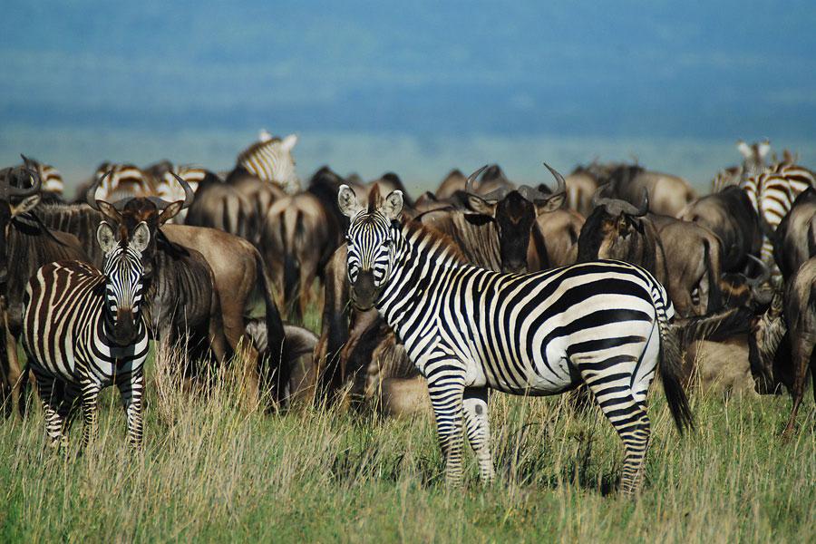 tanzania-wildlife.jpg