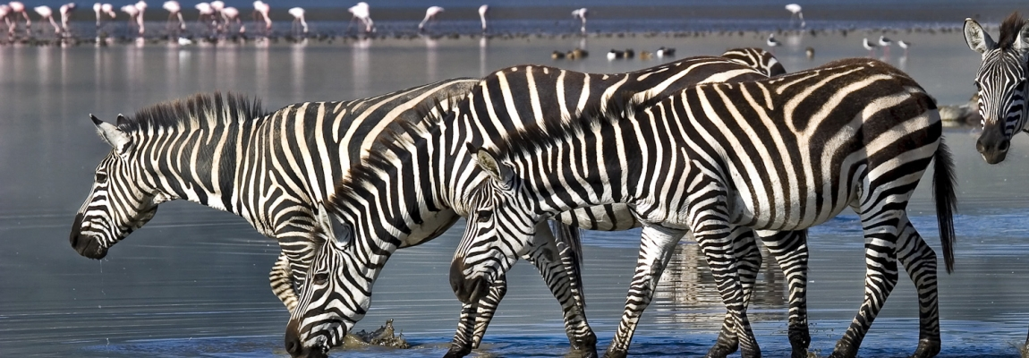 Zebras-in-Lake-Manyara-National-Park