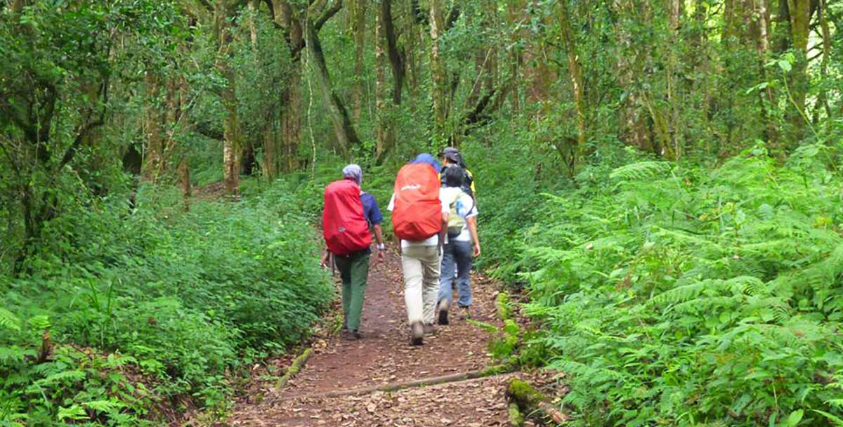 Marangu route on Kilimanjaro.jpg