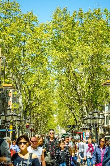 trees- la ramblas