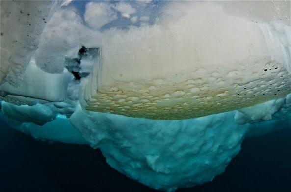 Algae under the ice (Photo: Peter Leopold).