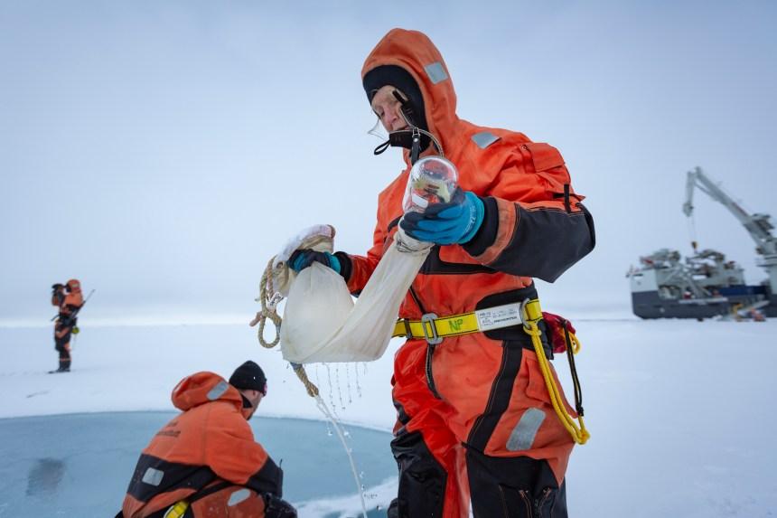 Bente Edvardsen sampling in Barents Sea.