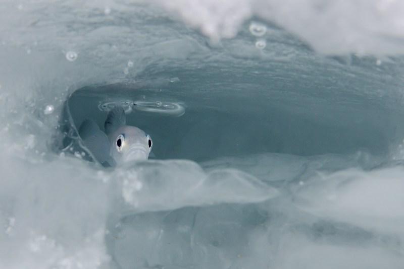 Polartorsk