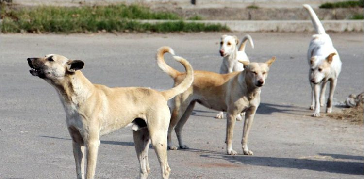 Photo of Three extra dog-bite instances reported in Shikarpur