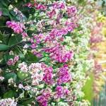 visit-to-kew-gardens-11104950