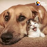 Tiny Cat And Huge Dog Are Obsessed With Each Other