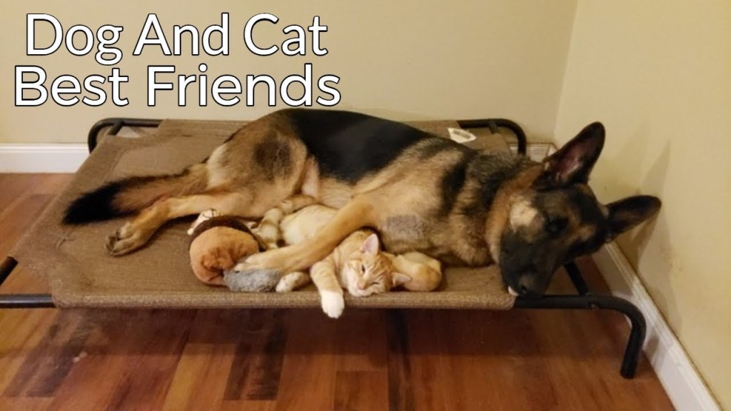 How a German Shepherd and a Kitten Became Best Friends