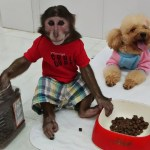 Read more about the article YoYo Jr takes care of CoCo after surgery
