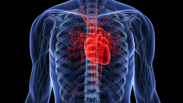 Resultado de imagen para corazón humano