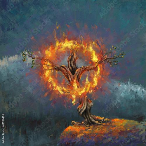 burning bush kaufen # 70