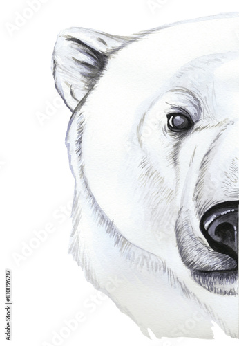 Drawing With Watercolor Of Predator Mammal Polar Bear Artic Portrait Of Polar Bear In Realism Style White Wool Pattern Printshop Winter New Year Christmas On White Background Buy This Stock Illustration