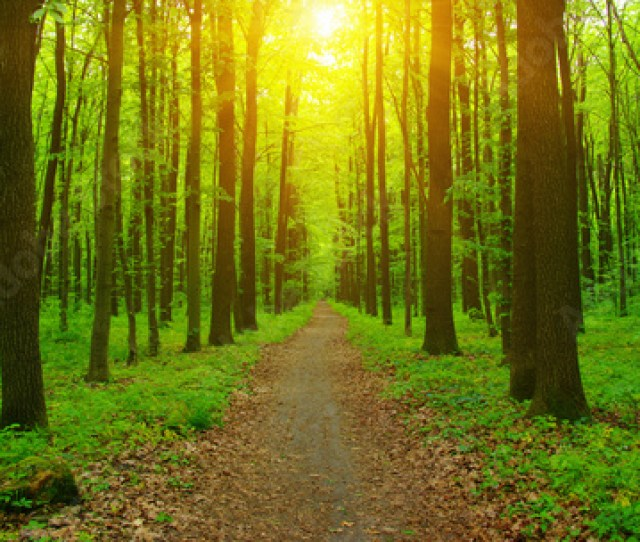 Click For Wall Decals Price  C B Forest And Sun Rays