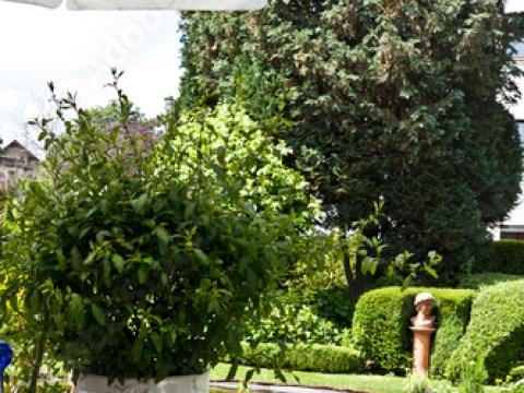terrasse am teich terrasse und teich - buy this stock photo and explore