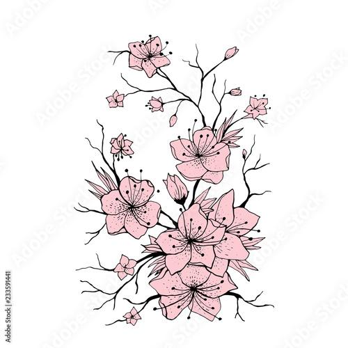 sakura branch hand drawn illustration