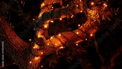 christmas lights miami # 77