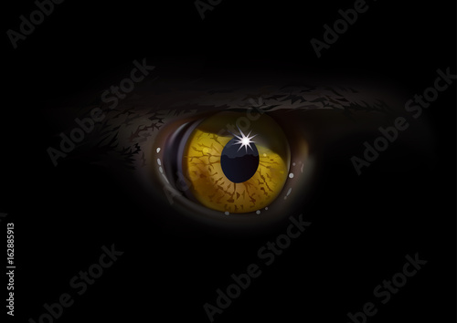 Eagle Eye Macro Detailed And Realistic Illustration On Black Background Vector