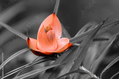 les belles couleurs d une fleur sur un