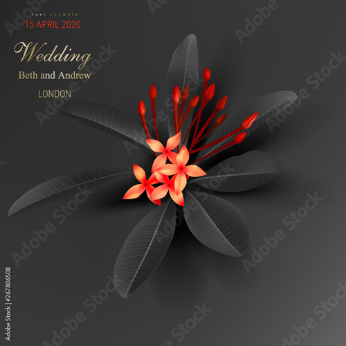 tropical black leaves and exotic red