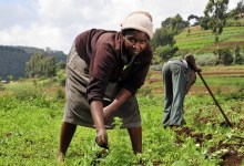 Photo of Lonely Agric…as more people abandon the sector