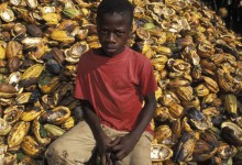 Photo of US report on child labour on West African cocoa farms faces review after criticism