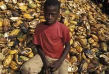 Child labourer on a cocoa farm