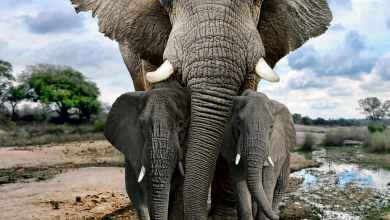 Photo of Kenyan wanted in illegal ivory trade inquiry is arrested