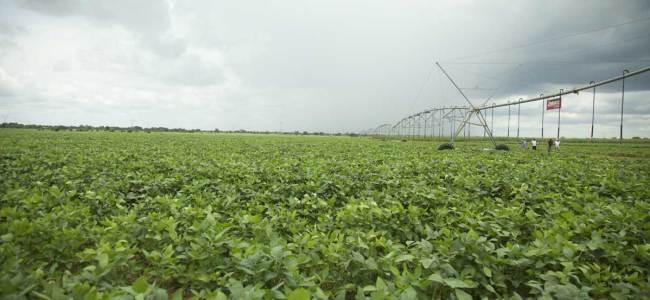 AfDB SAPIP soybean farm