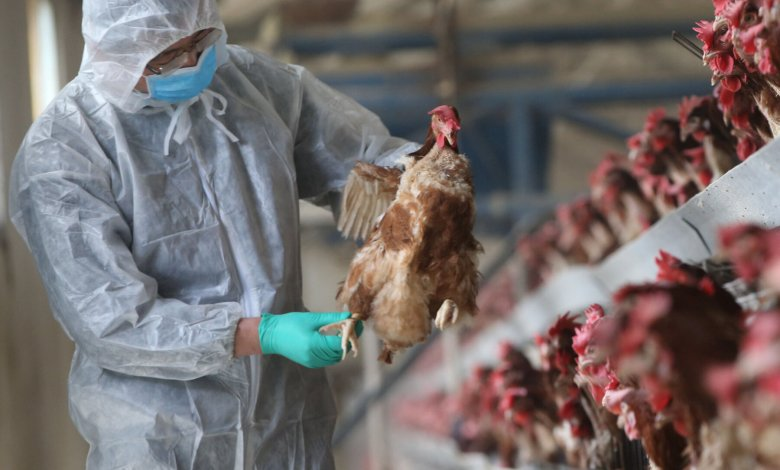 12 Regions On Red Flag Alert Over Possible Bird Flu