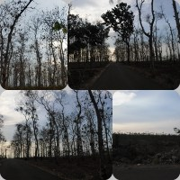 OJT #2 Belajar dari Pohon Jati