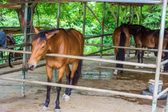 Some of the horses at The Green Ranch