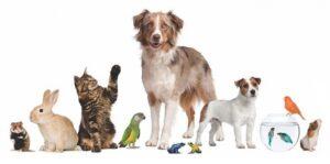 Hayvan Hakları Nedir?
