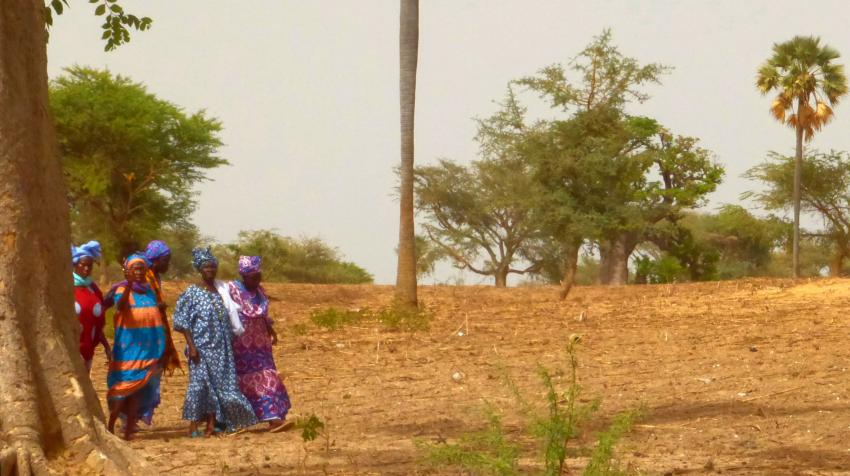 Mujeres andando entre los baobabs