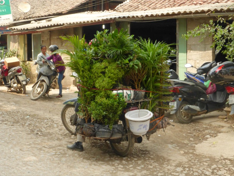 Moto vietnam - con plantas
