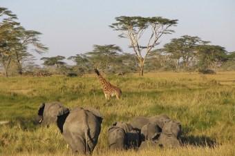 タンザニアの超人気4大観光スポット