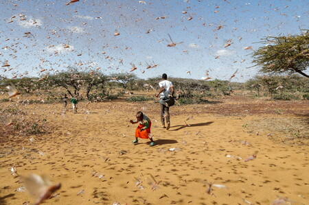 A swarm flooding Naiperere, near the Kenyan town of Rumuruti in the end of January.  When the rains come, the locusts can form swarms of more than 15 million insects per square mile.  Photograph by Baz Ratner for Reuters.