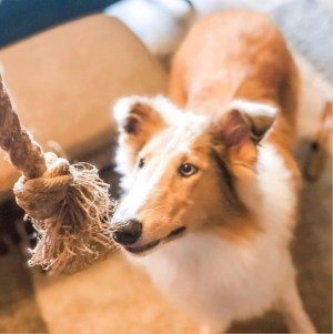 Hemp Dog Rope Toy