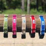 Asatre Hemp Dog Collars