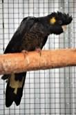 Ballarat Aviary 7