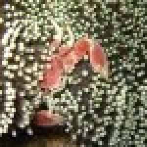 porcellane-des-anemones