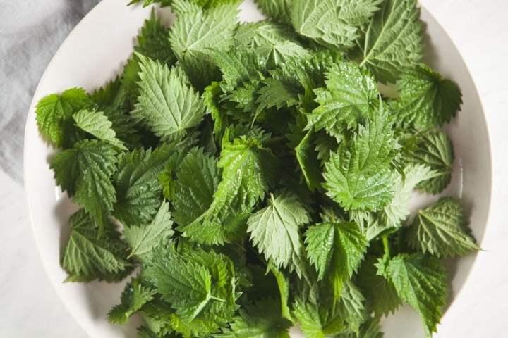 Plate of fresh Spring Nettles