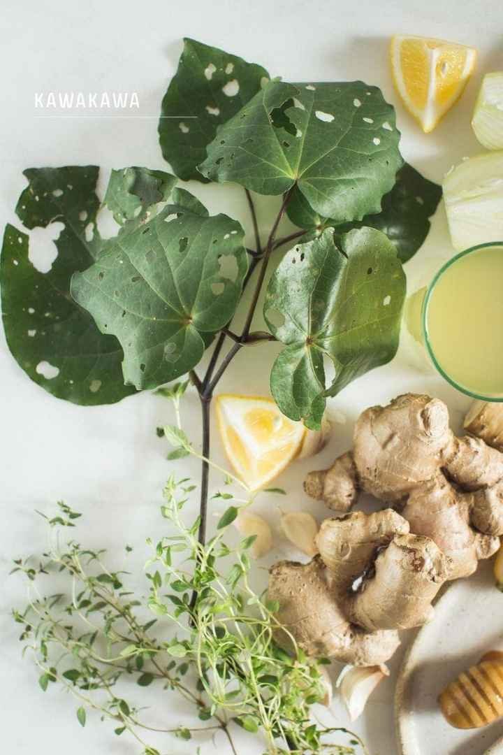 Close up of kawakawa, a New Zealand native herb used in my homemade immune and digestive tonic