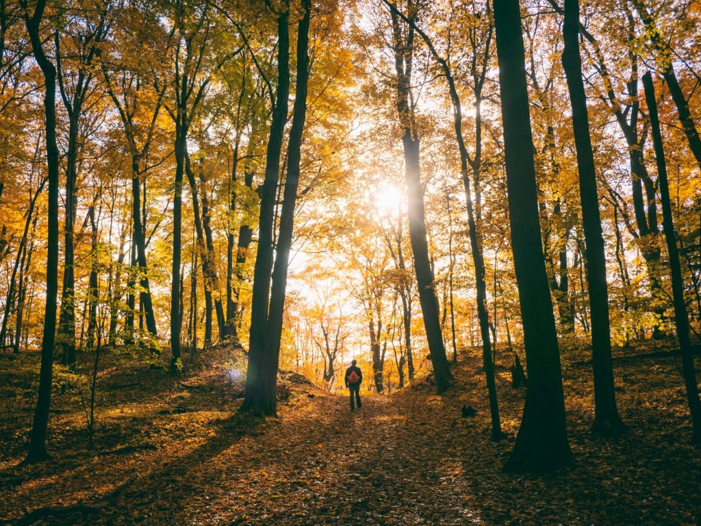 Hike Somewhere New: The Best Trails in Southeastern Wisconsin to Explore This Fall