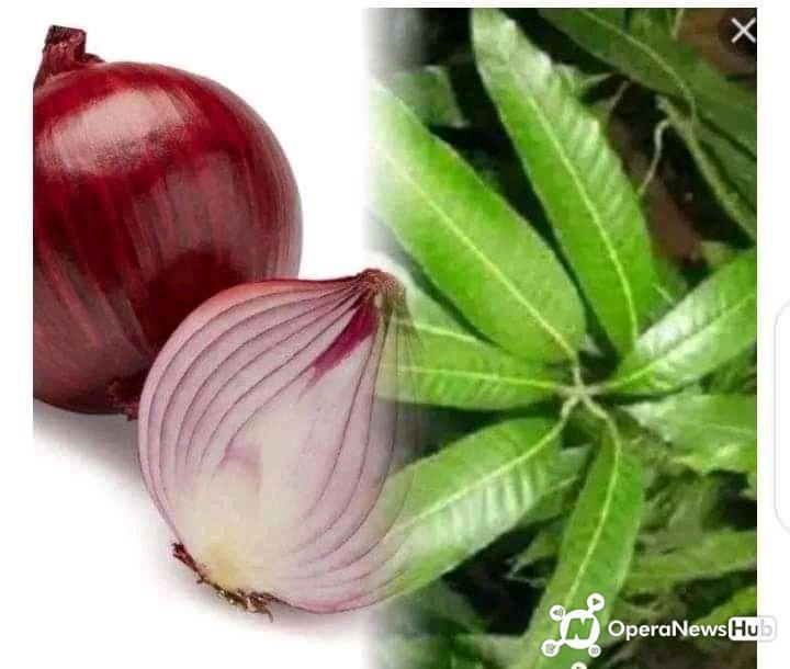 Boil Mango Leaves And Onion For 30 Minutes And Drink Twice A Day To Cure This Diseases