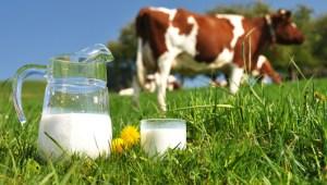 Organic Milk