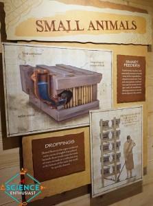Ark Encounter Small Animals